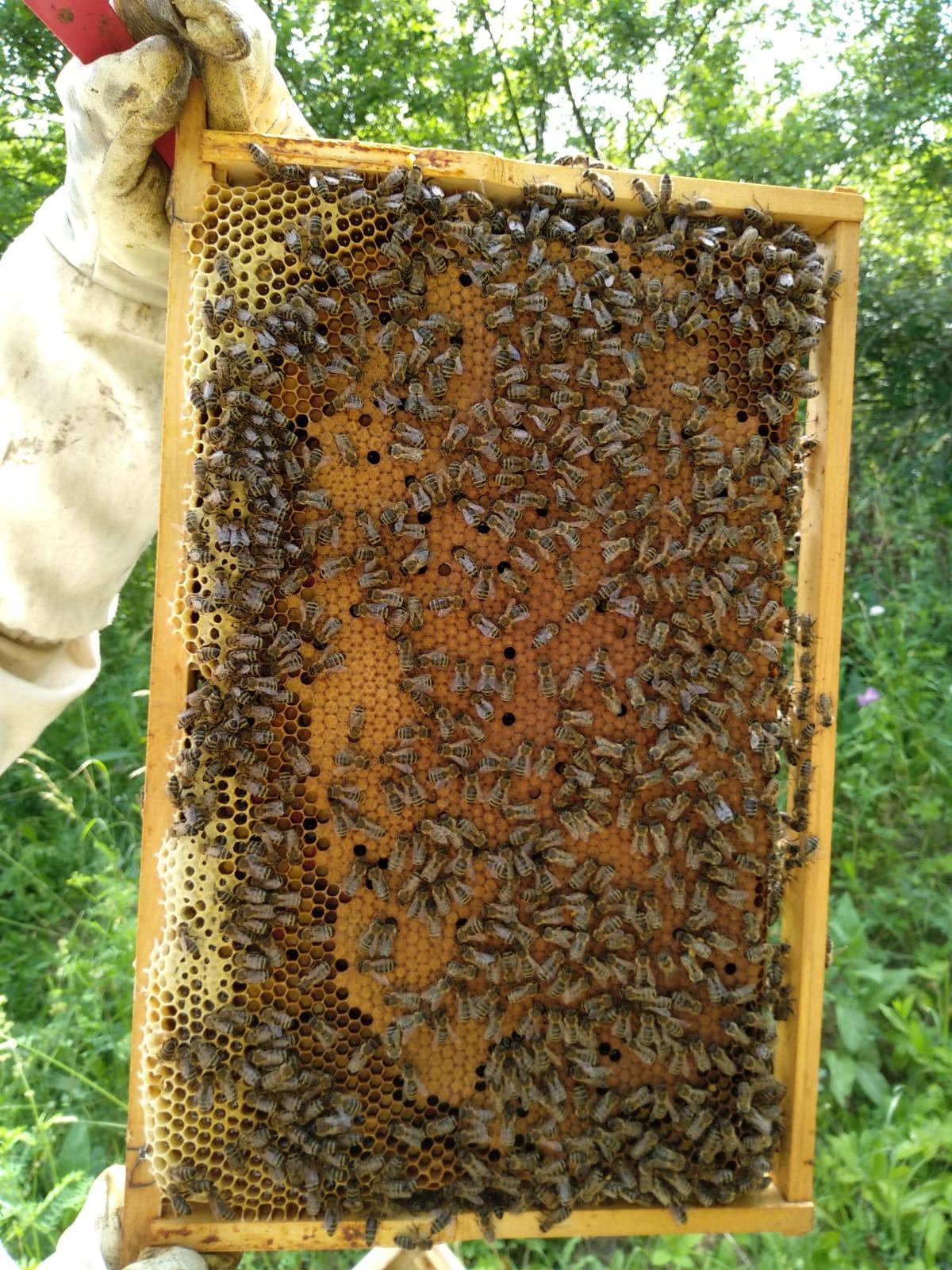 Včelí med - Obrázok č. 2