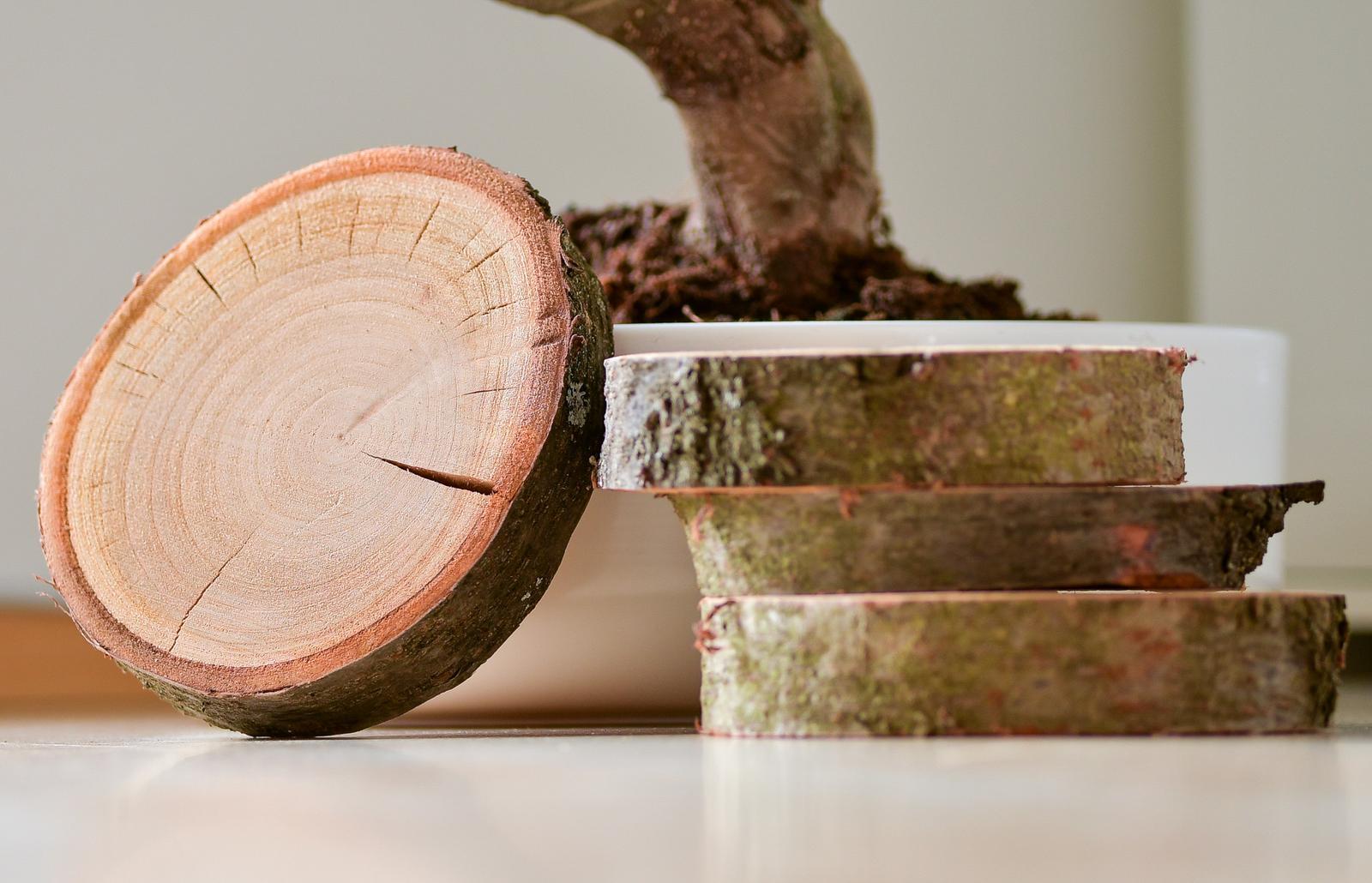 Kulatiny dřevo velké - Obrázek č. 1