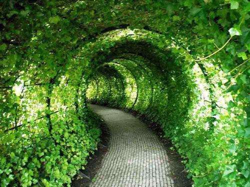 Okrasné záhrady - Obrázok č. 45