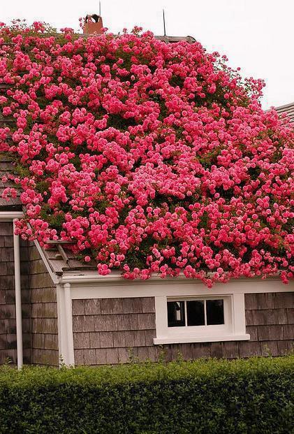 Okrasné záhrady - Obrázok č. 50