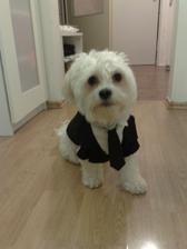 a takéto  chcem pre nášho psíka presne s kravatou ...on je veľká súčasť rodiny