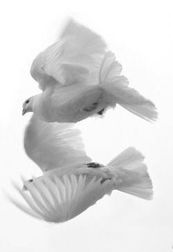 29.8.2009 - holubice budu