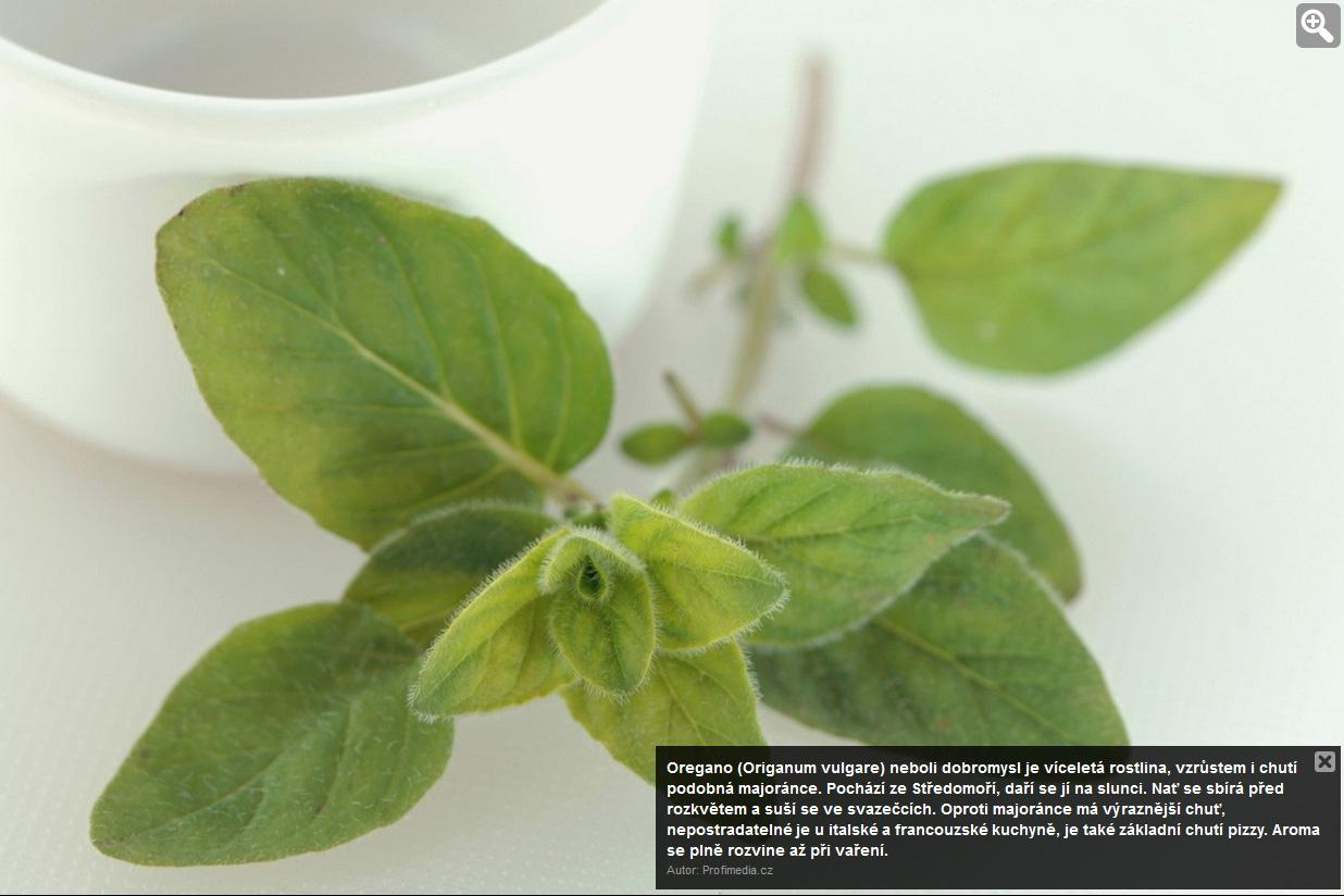 Zahrada - Obrázek č. 25