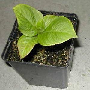 Zahrada - Mám slíbený řízek hortenzie, tak snad se chytne. Kdyby jste mě ještě někdo chtěl potěšit, nepohrdnu ;-)