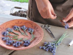 Tak jsem dnes zpracovávala první sklizeň levandulky :-)