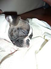 sháníme pelíšek pro štěndo