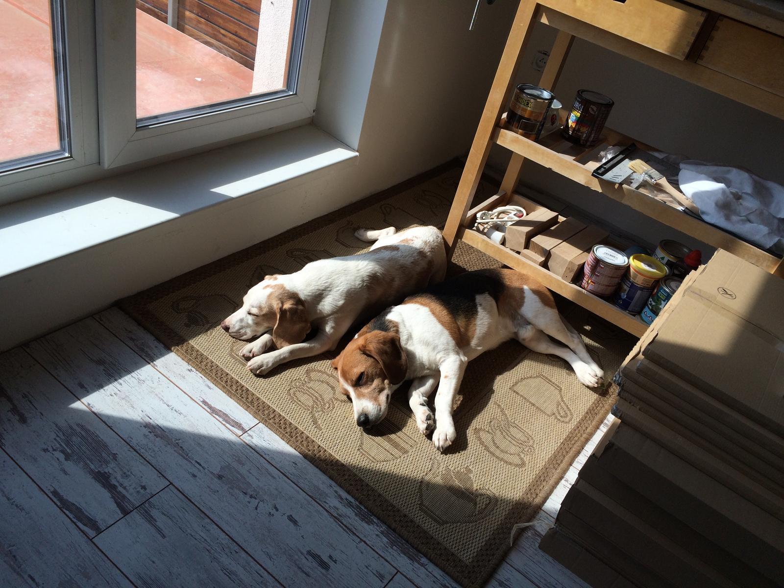 Splněný sen ... domeček - a kdyz mi pracujeme hafaci nas pekne hlidaji, nebo spise nam za zadama chrapou :)