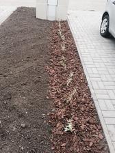 Som zasadila plot :)
