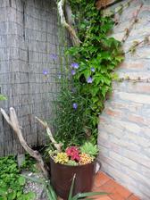Lesným zvončekom aj iným rastlinám sa darí v starom hrnci