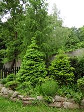 V rohu za chatou sa darí aj stromom aj iným rastliném