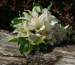 Tahle to vyhraje - orchidee jsou nádherné!