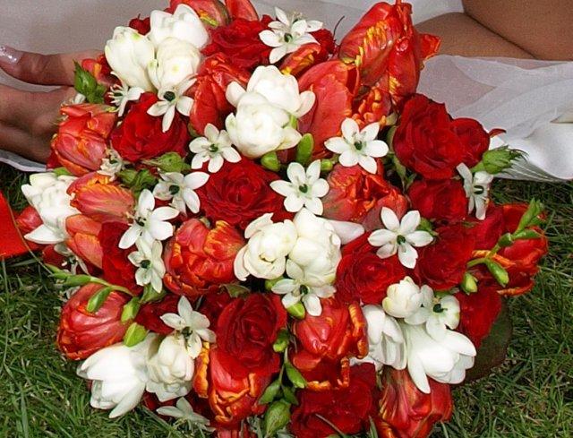 Tulipápy, tulipány a zase jen tulipány - podruhé - Obrázek č. 1