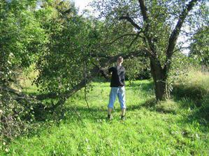 Jabloň taky musela dolů