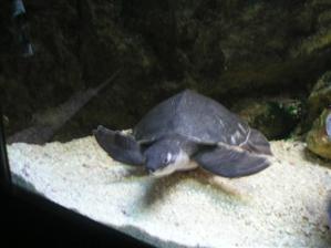 Želvička, se mi líbila nejvíc