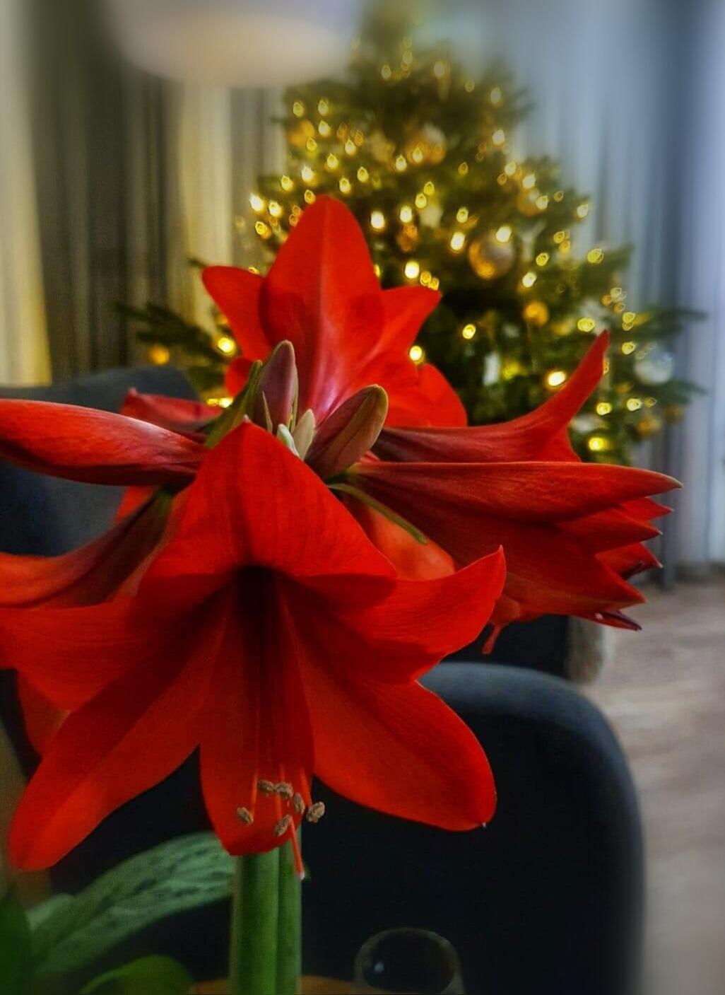 ...vánoční čas v roce 2020🌲🌲🌲❤ - Obrázek č. 54