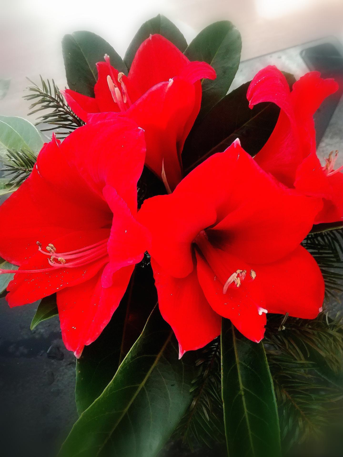 ...vánoční čas v roce 2020🌲🌲🌲❤ - Obrázek č. 55