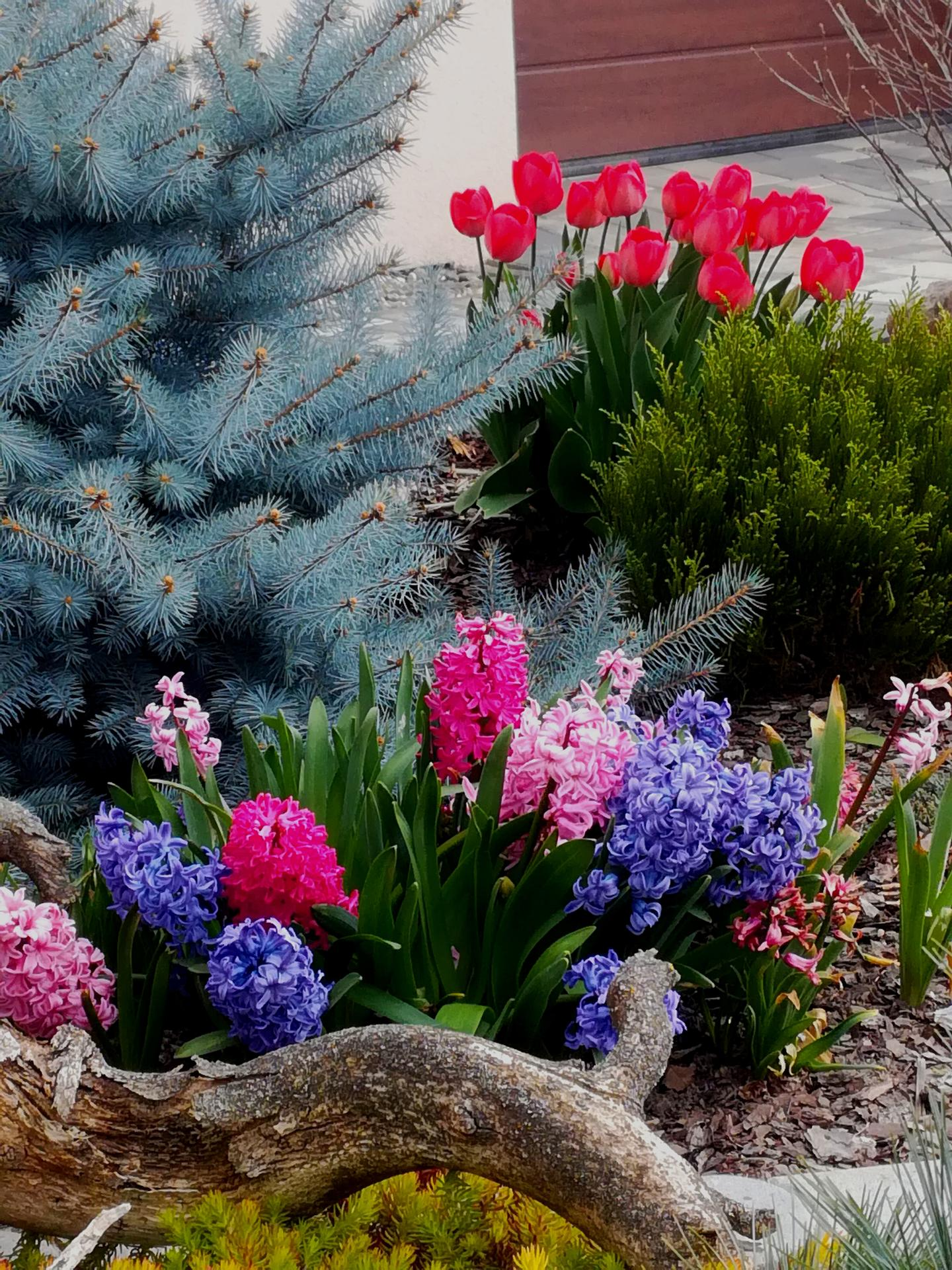 Zahrada 2021 🌲🌸🌞❤ - Obrázek č. 35