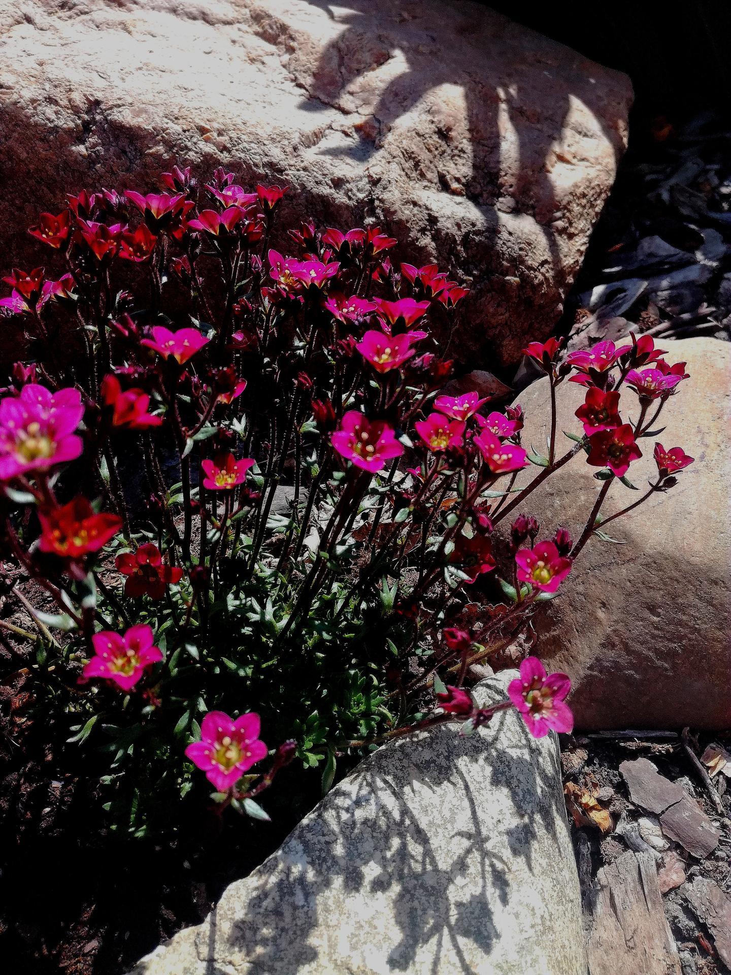 Zahrada 2021 🌲 - Obrázek č. 54