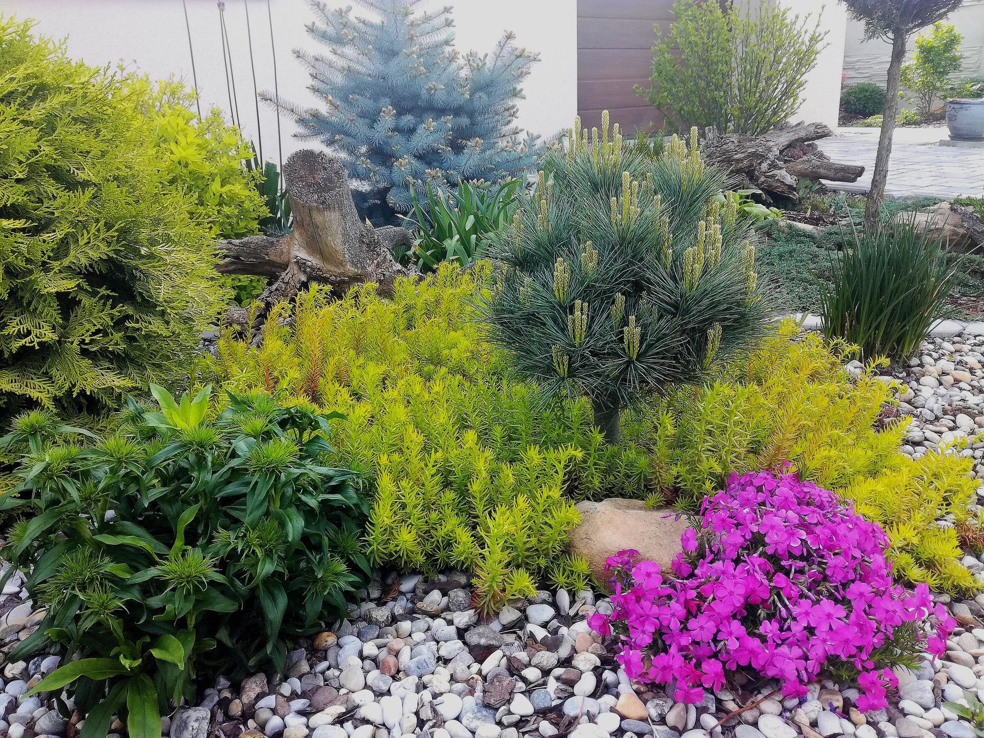 Zahrada 2021 🌲 - Obrázek č. 70