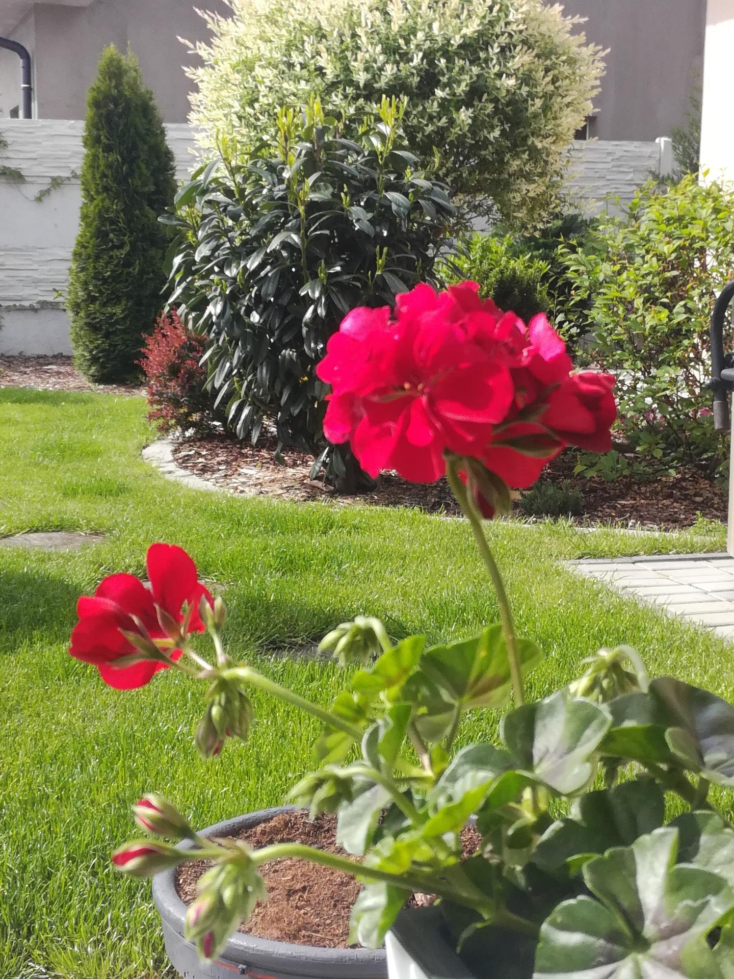 Zahrada 2021 🌲 - Obrázek č. 74