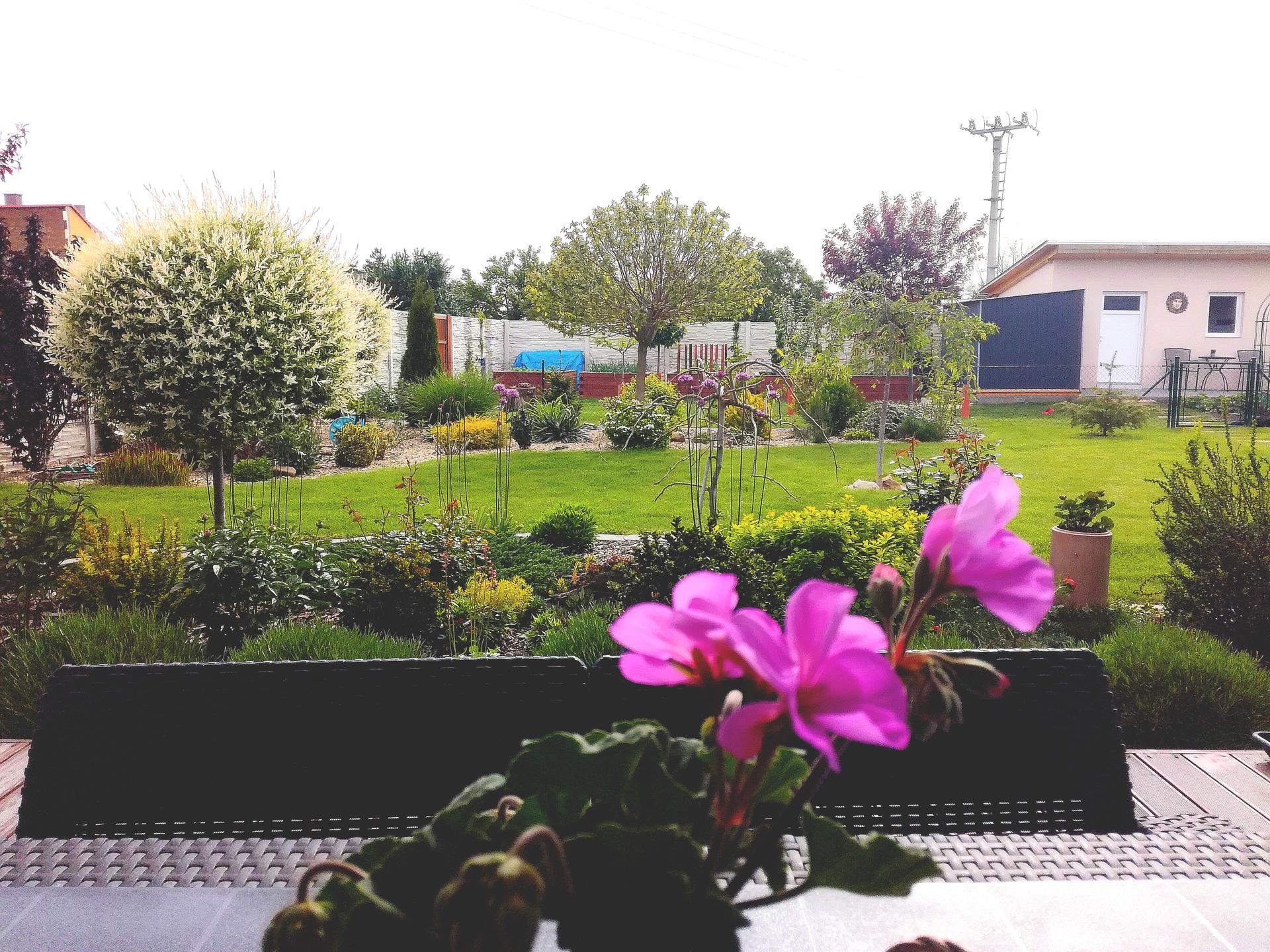 Zahrada 2021 🌲 - Obrázek č. 81