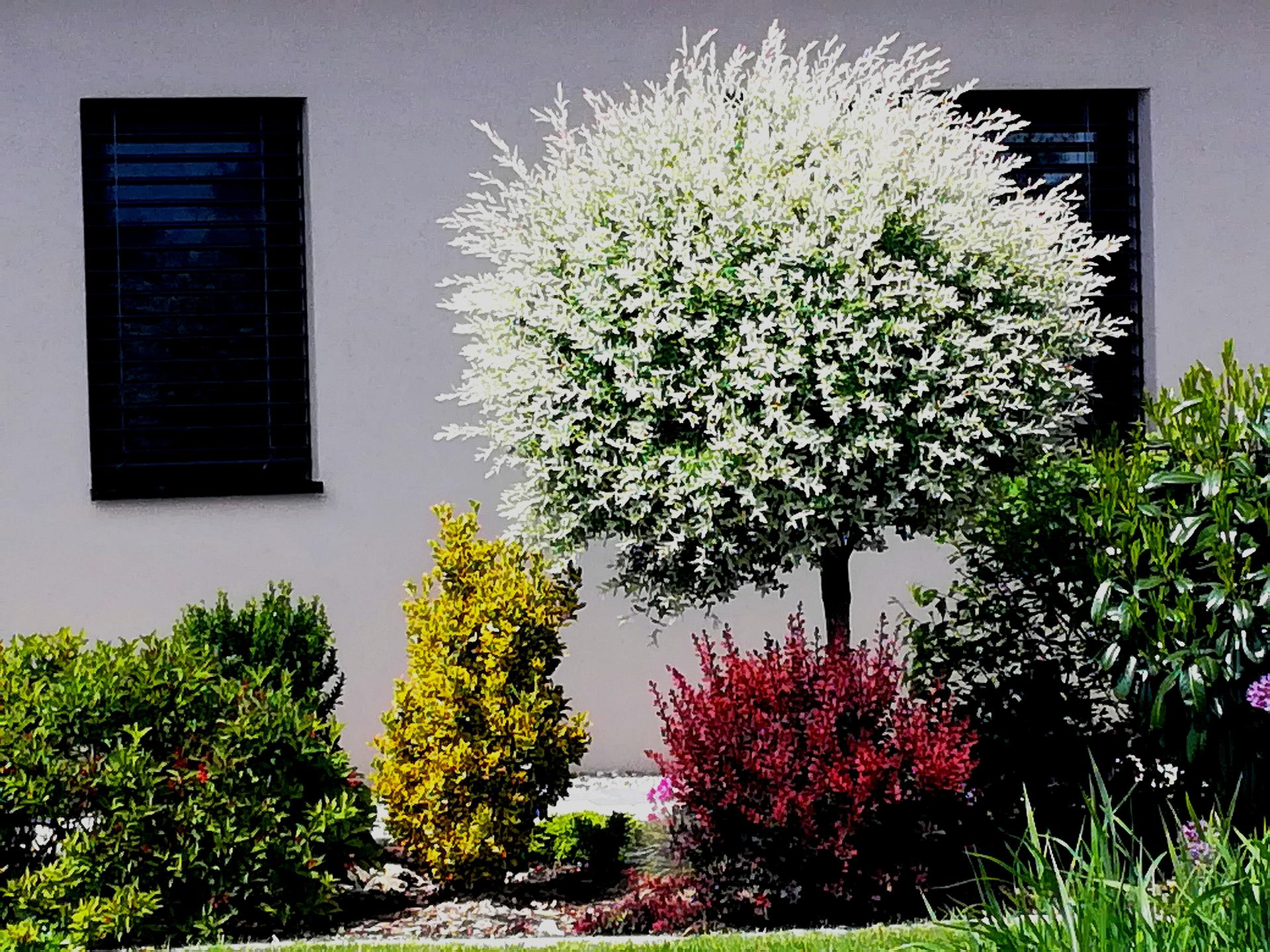 Zahrada 2021 🌲 - Obrázek č. 87