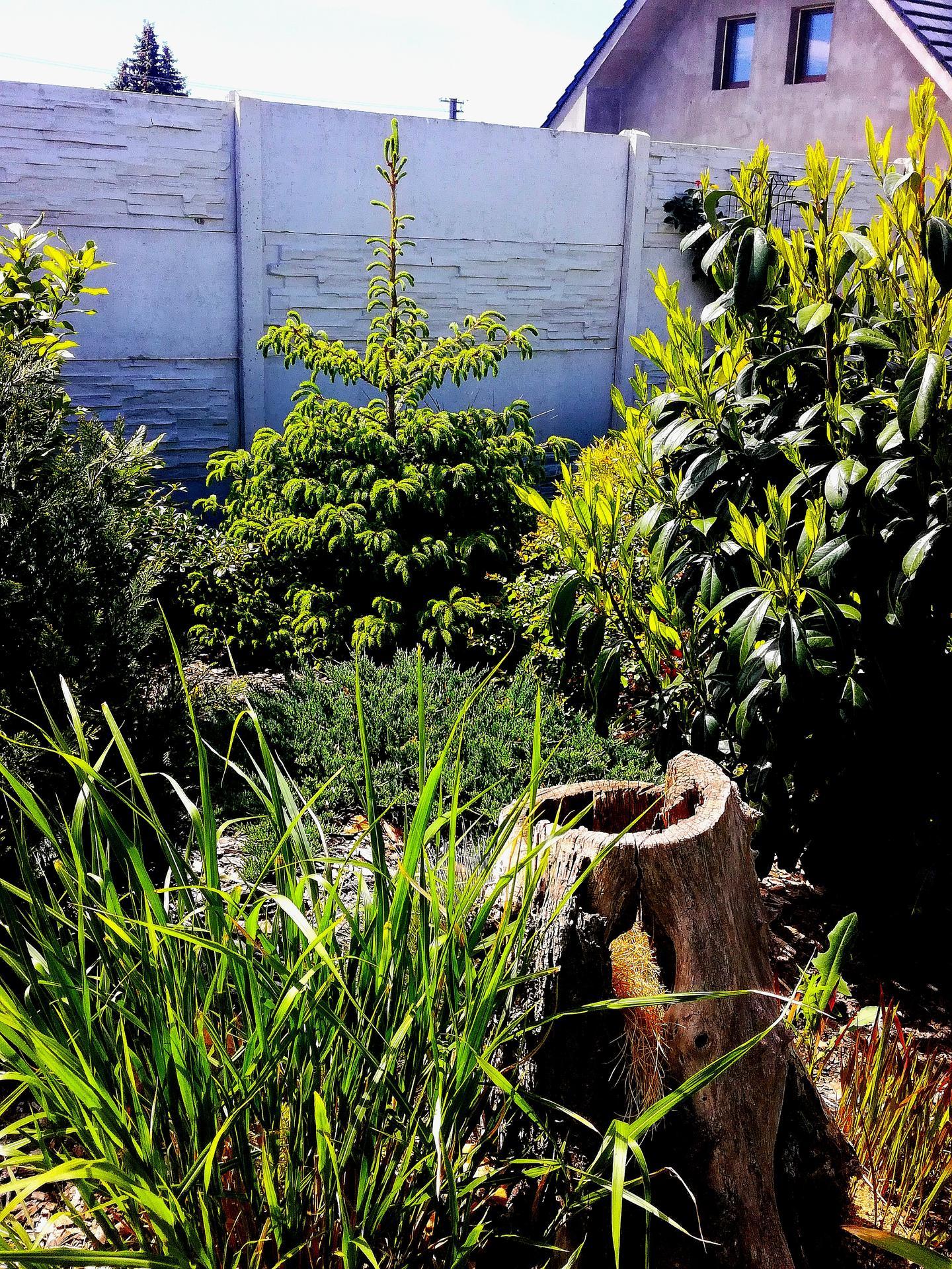 Zahrada 2021 🌲 - Obrázek č. 86