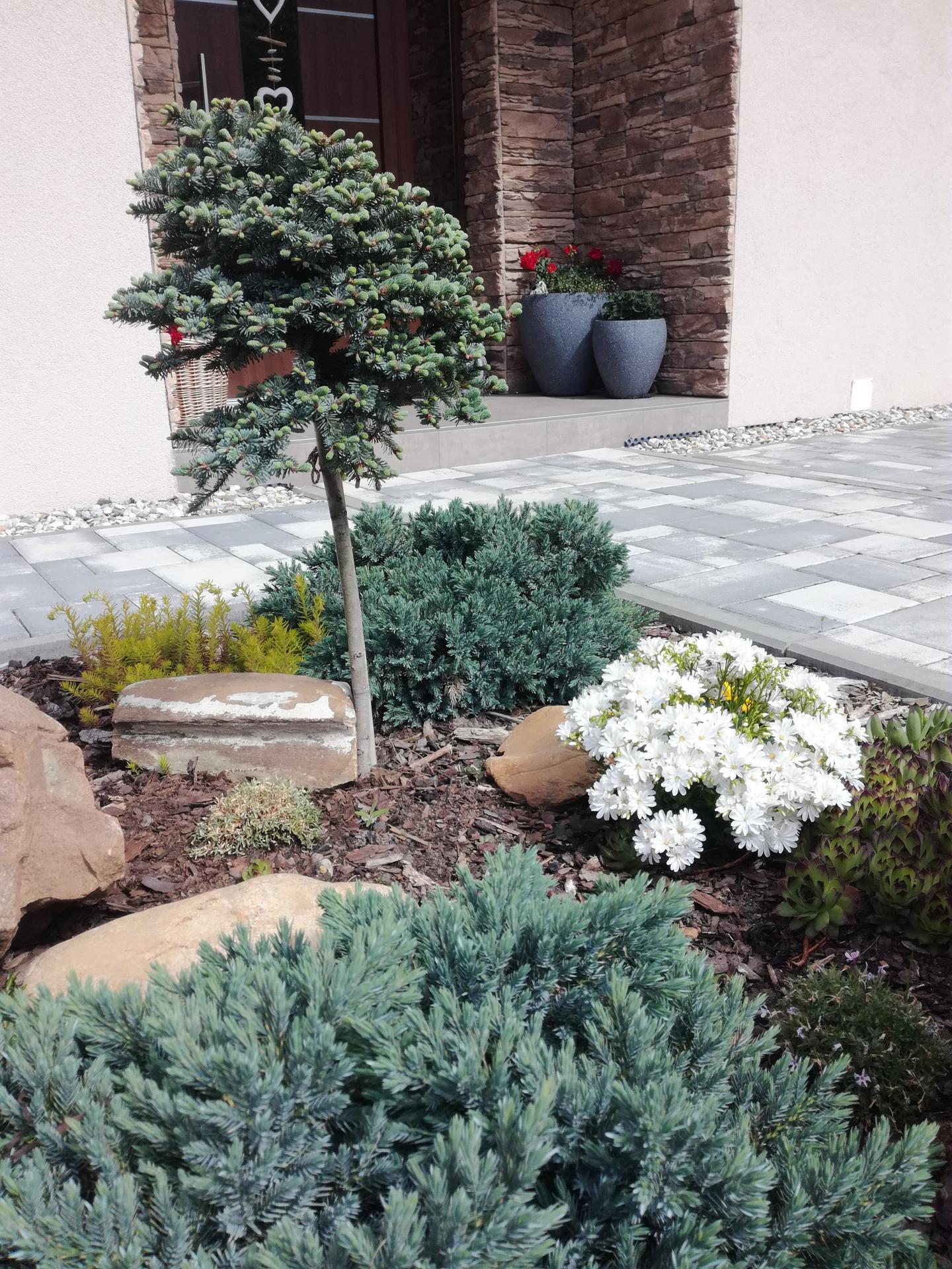 Zahrada 2021 🌲 - Obrázek č. 95