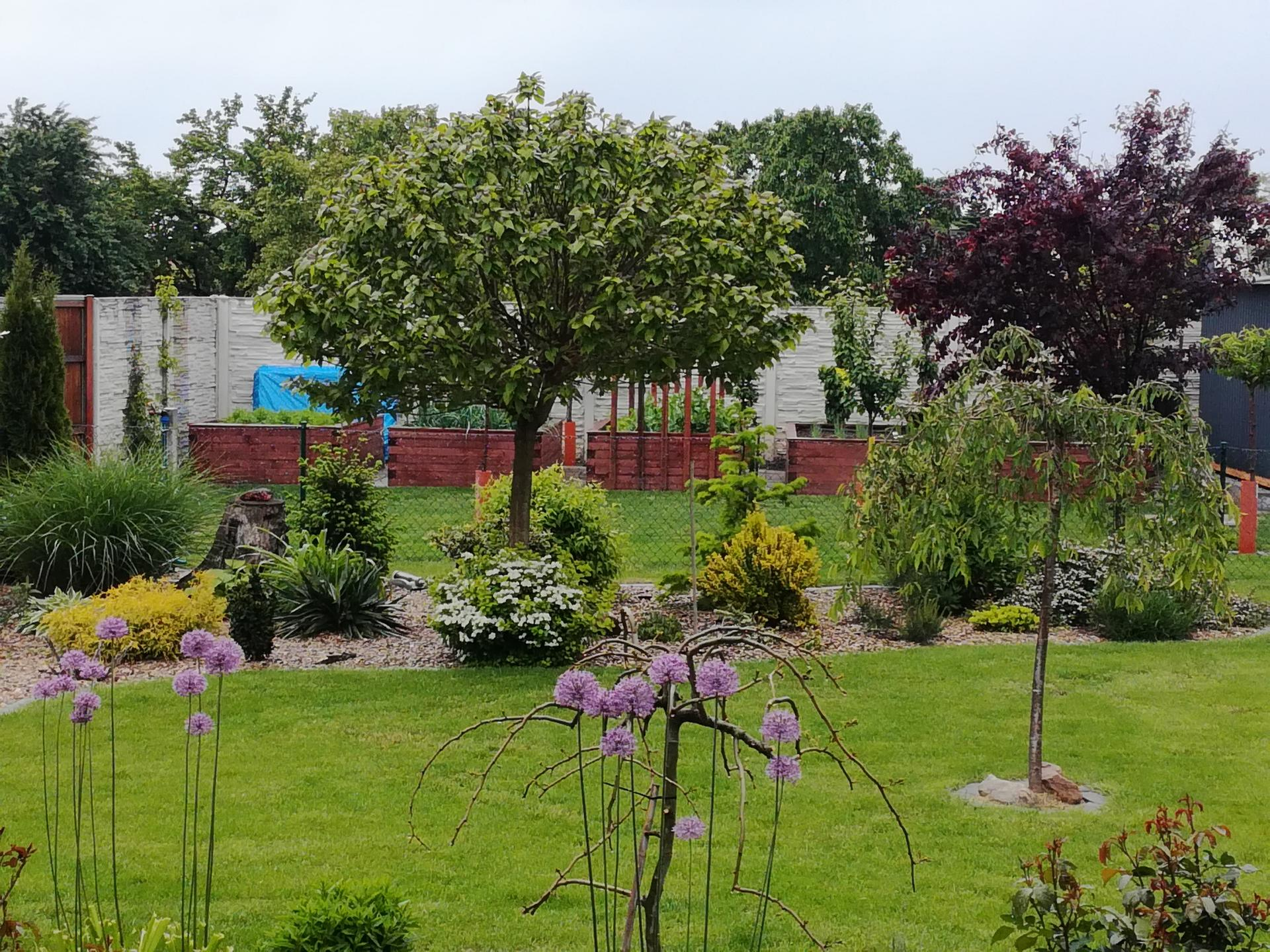 Zahrada 2021 🌲 - Obrázek č. 99