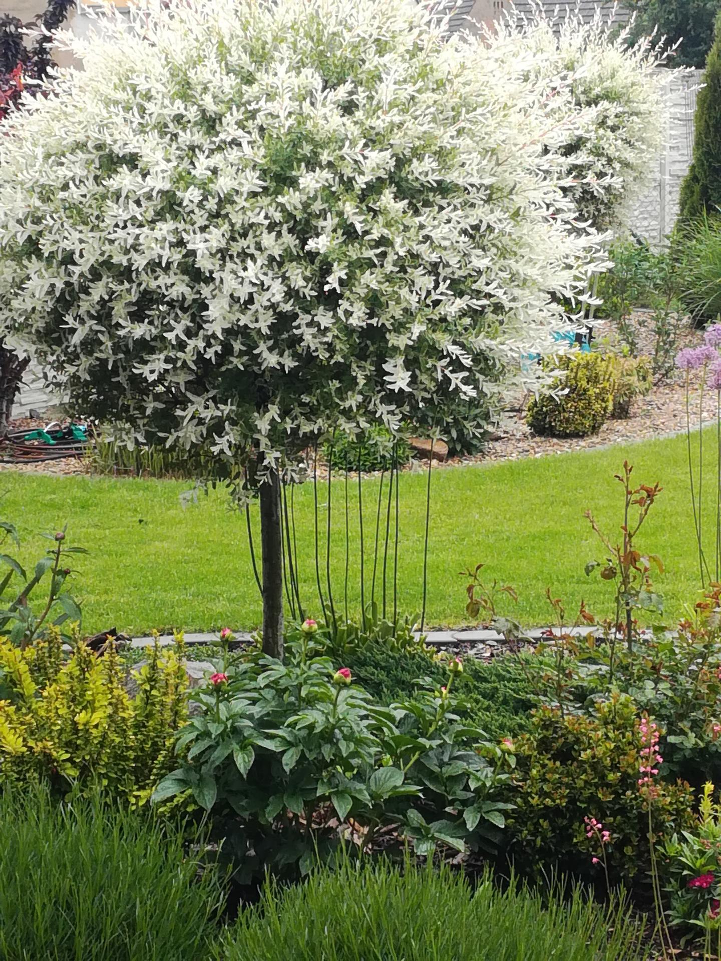 Zahrada 2021 🌲 - Obrázek č. 101