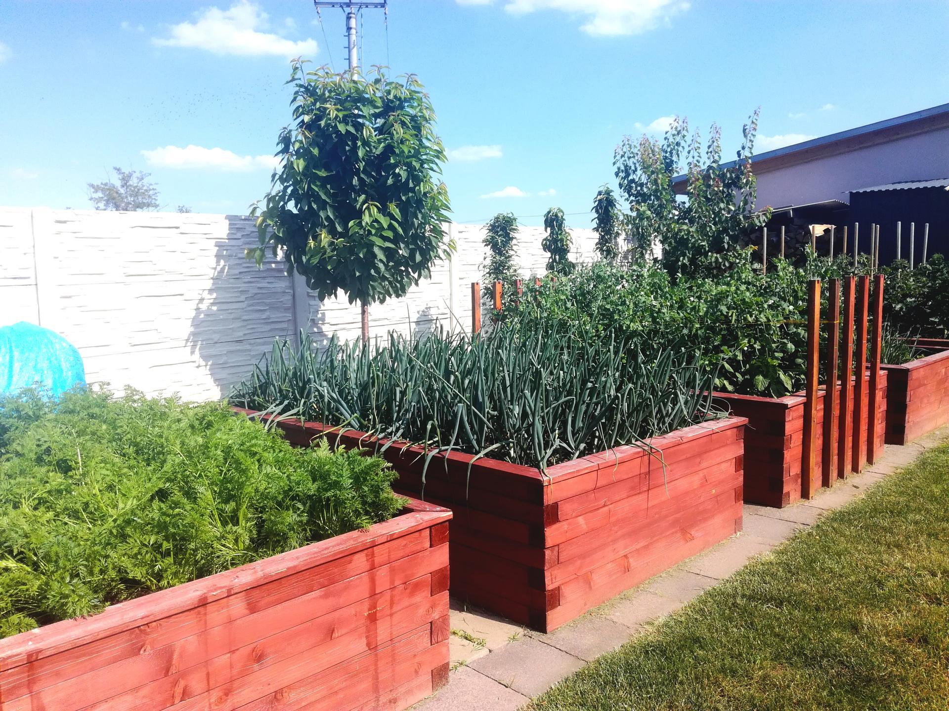 Zahrada 2021 🌲 - Obrázek č. 139