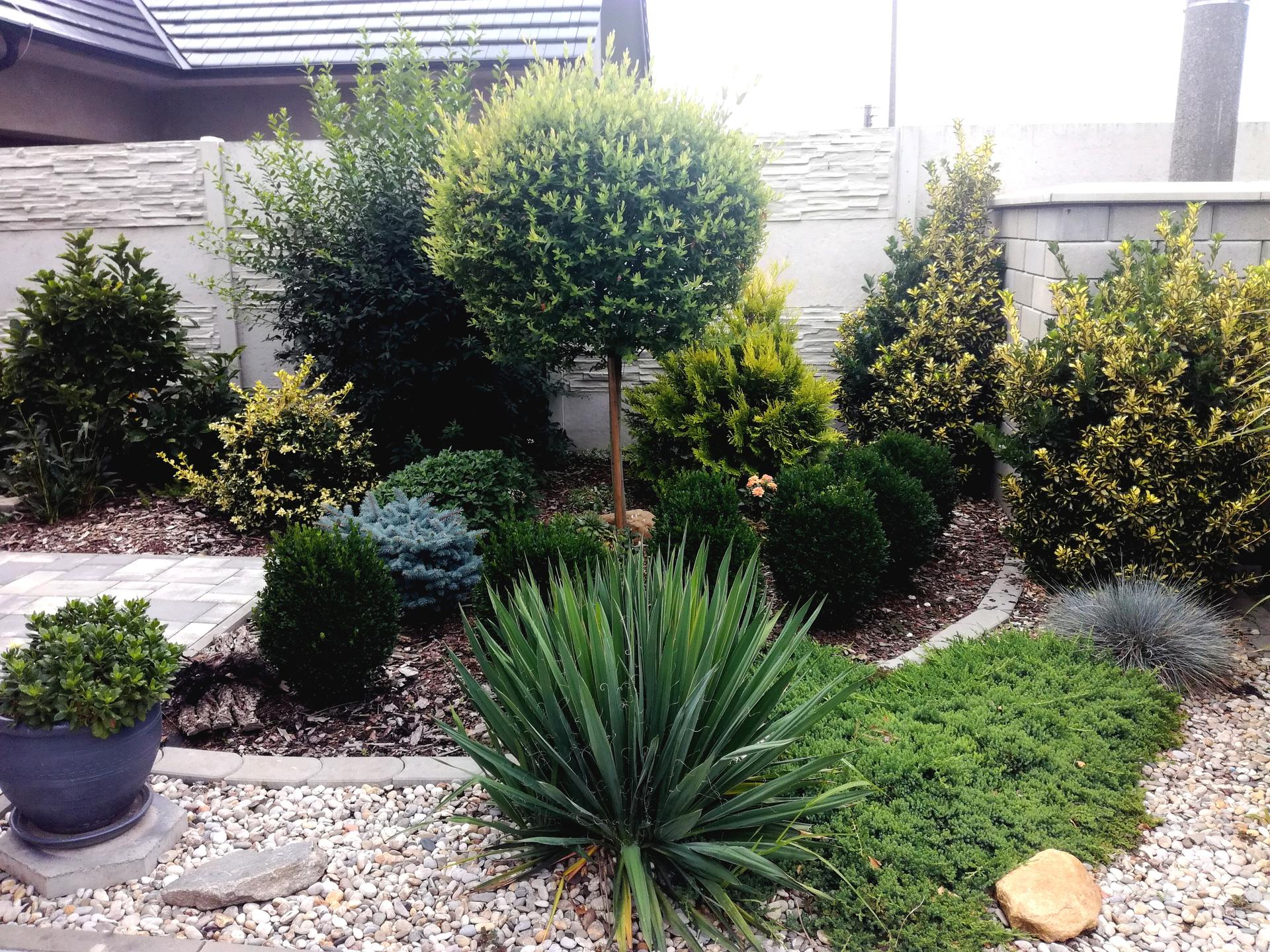 Zahrada 2021 🌲 - Obrázek č. 195