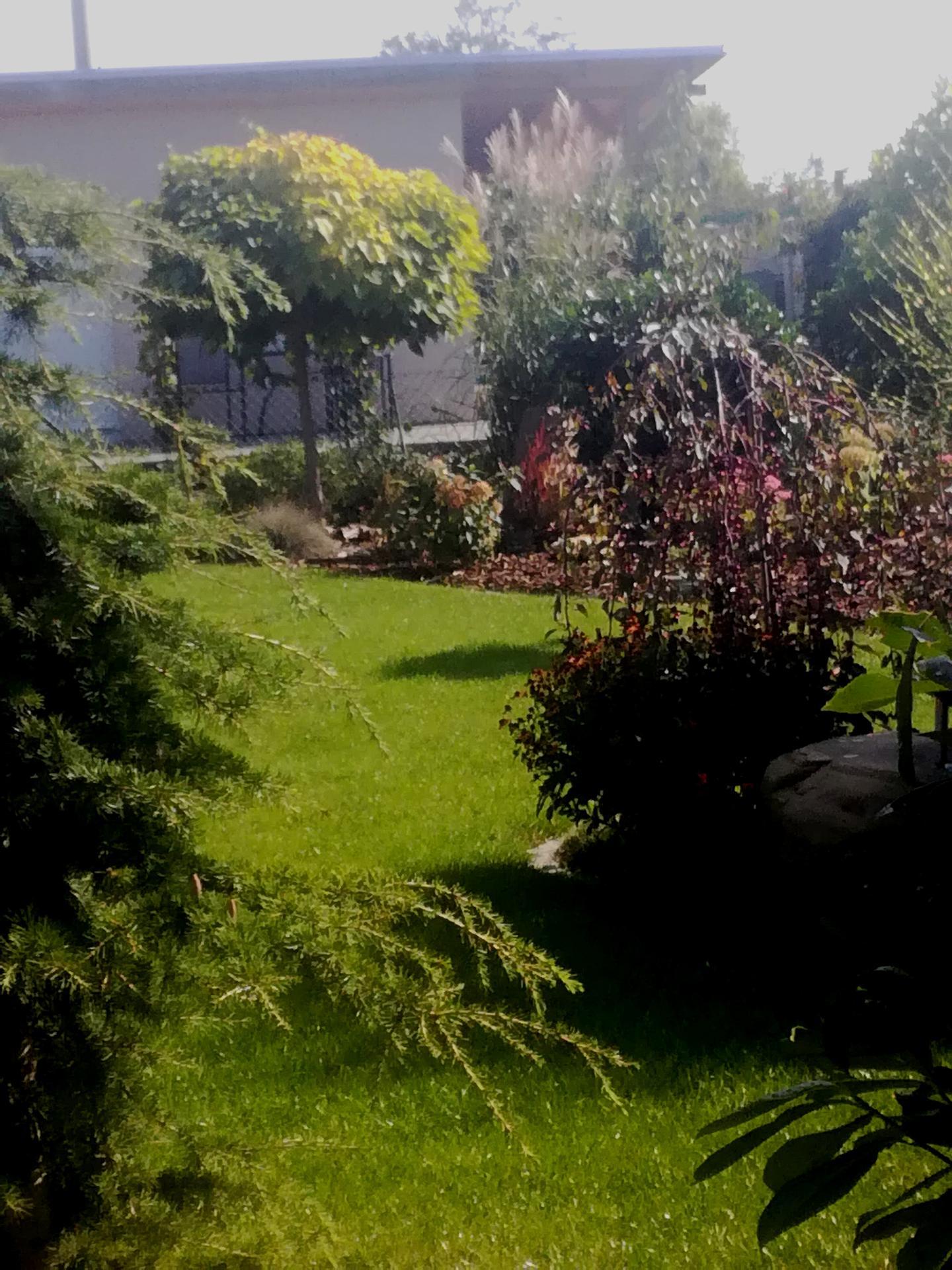 Zahrada 2021 🌲 - Obrázek č. 200