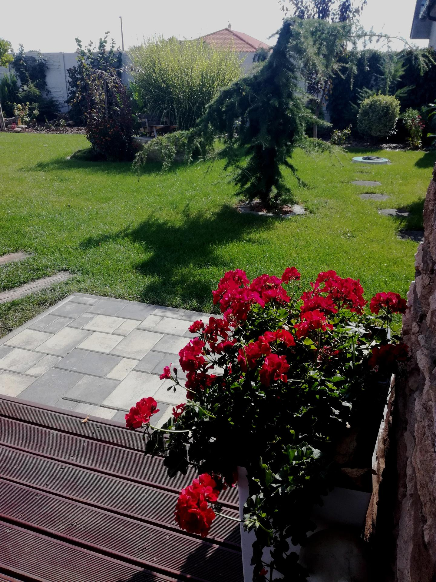 Zahrada 2021 🌲 - Obrázek č. 202