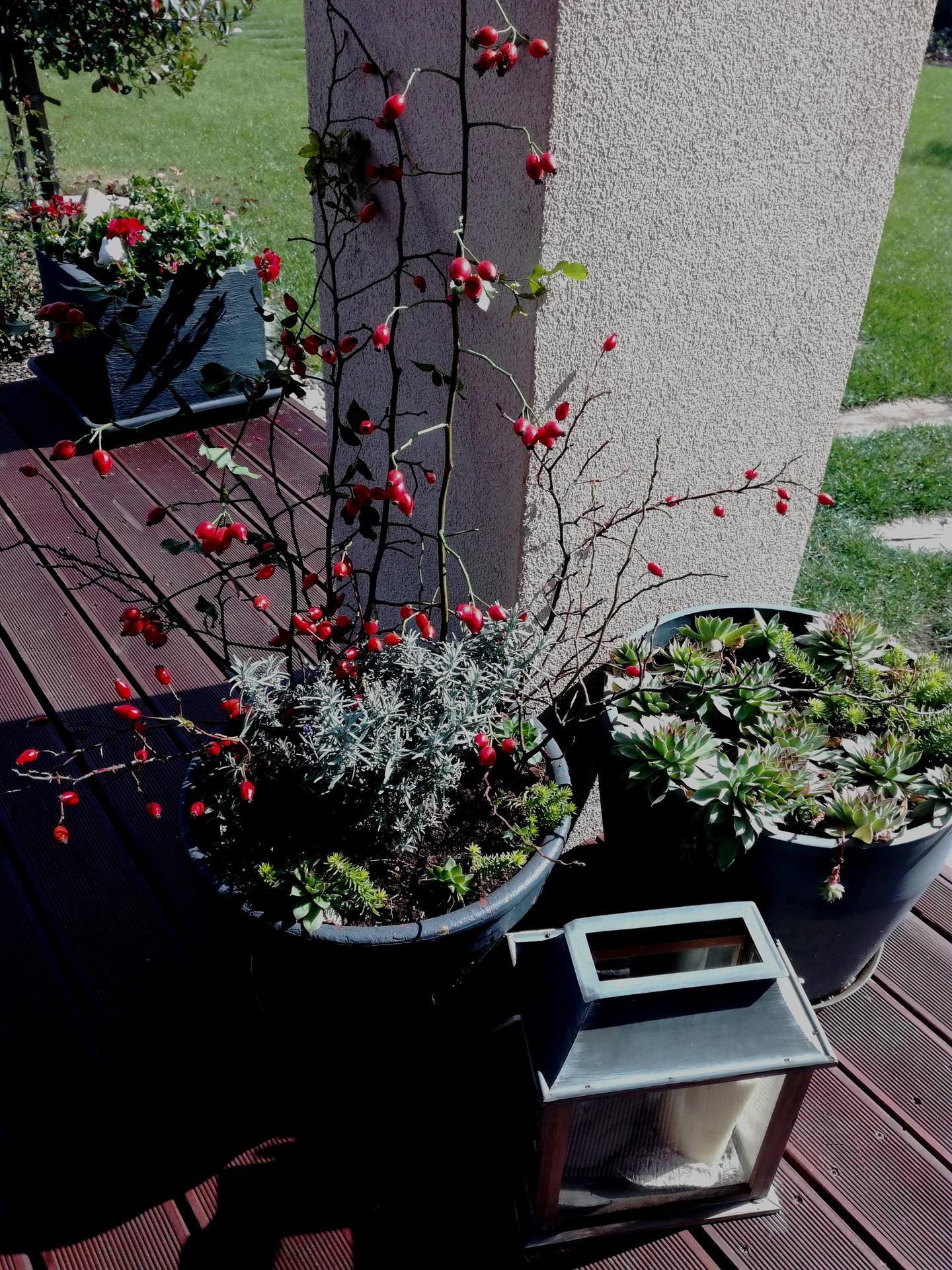 Zahrada 2021 🌲 - Obrázek č. 203