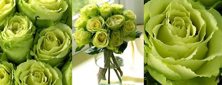 Květiny - Obrázek č. 12