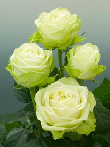 Květiny - Obrázek č. 11
