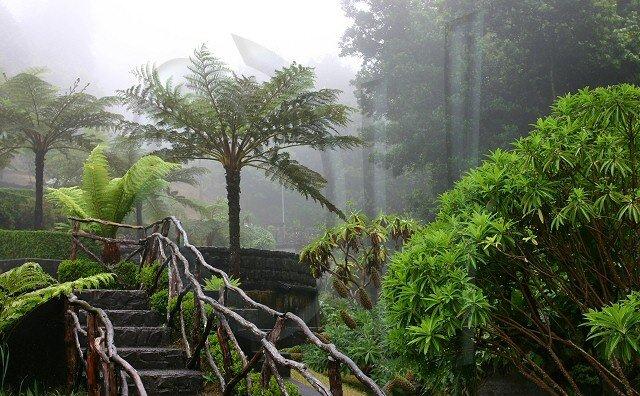 "Lucie & Radek ♥2.8.2008♥ - Madeira – ""Ostrov květin"", ""perla Atlantiku"", ""zelený ráj"""