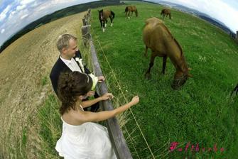 potkali jsme i koníky
