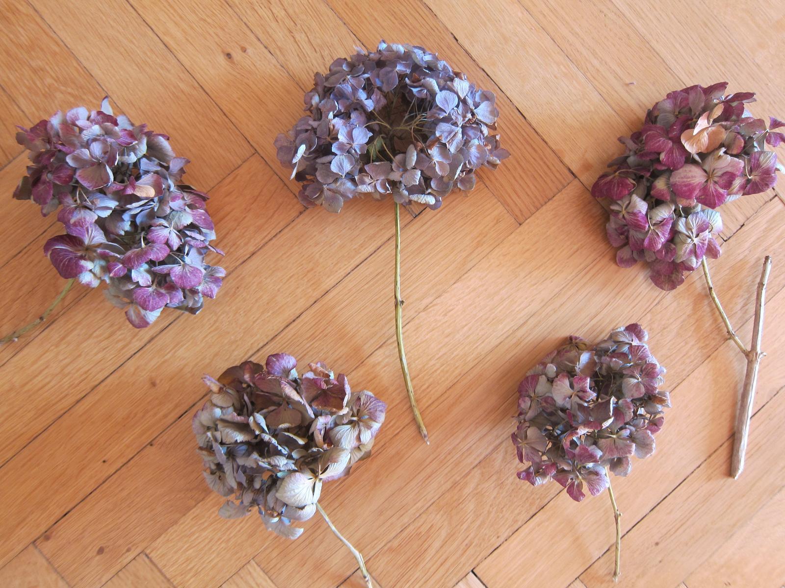 Sušená hortenzie-nové hlávky - Obrázek č. 1