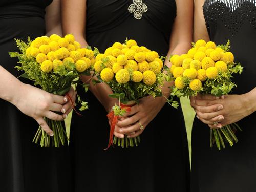 Hlada sa dokonala kytica...:-) - Craspedie, dalsia nadherna kvetinka :-)