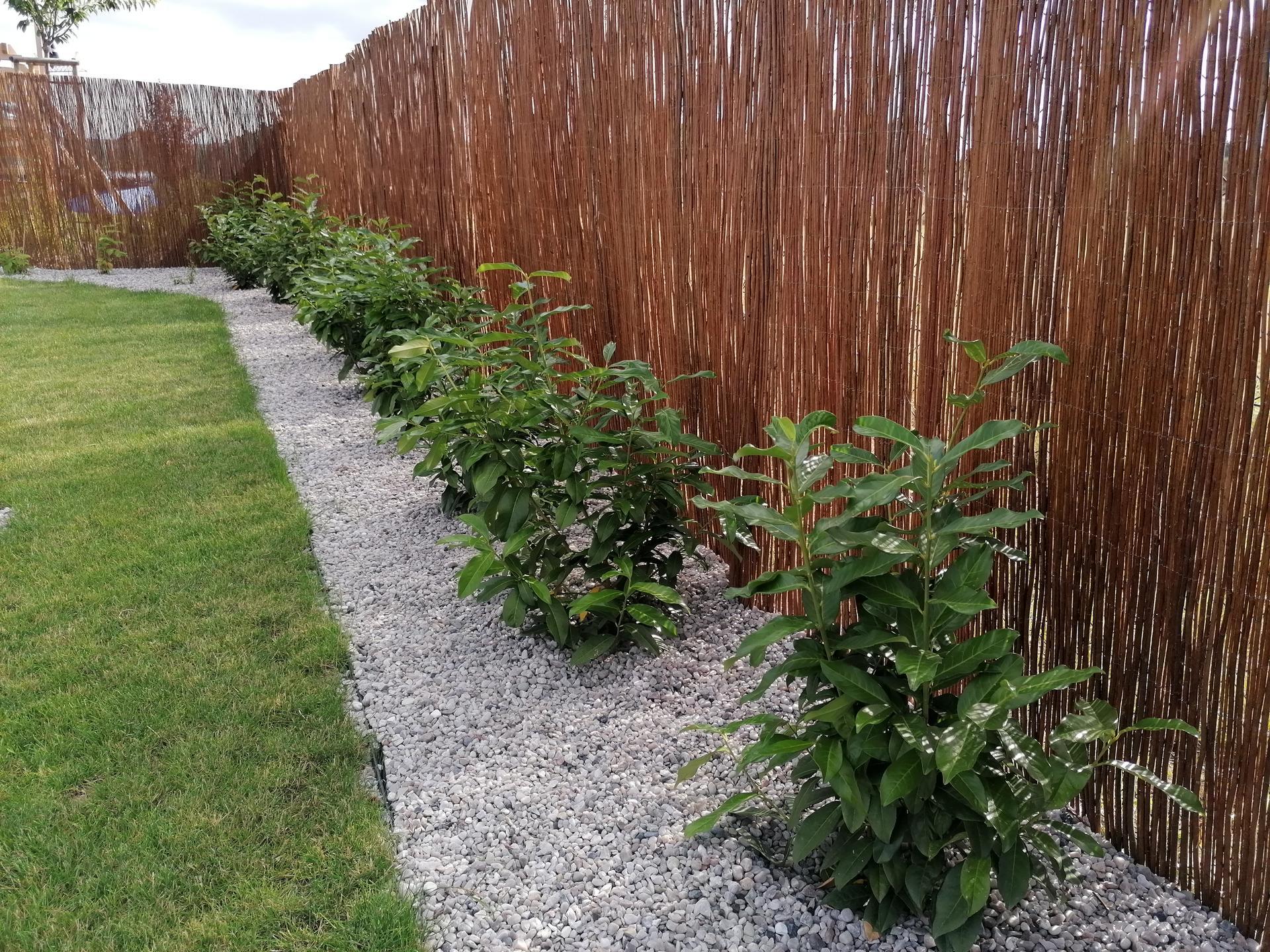 Začínáme se zahrádkou - Budoucí živý plot z bobkovišní