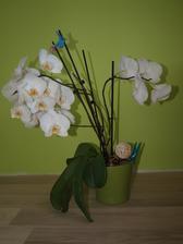 28 kvetov a kvitneme ďalej...