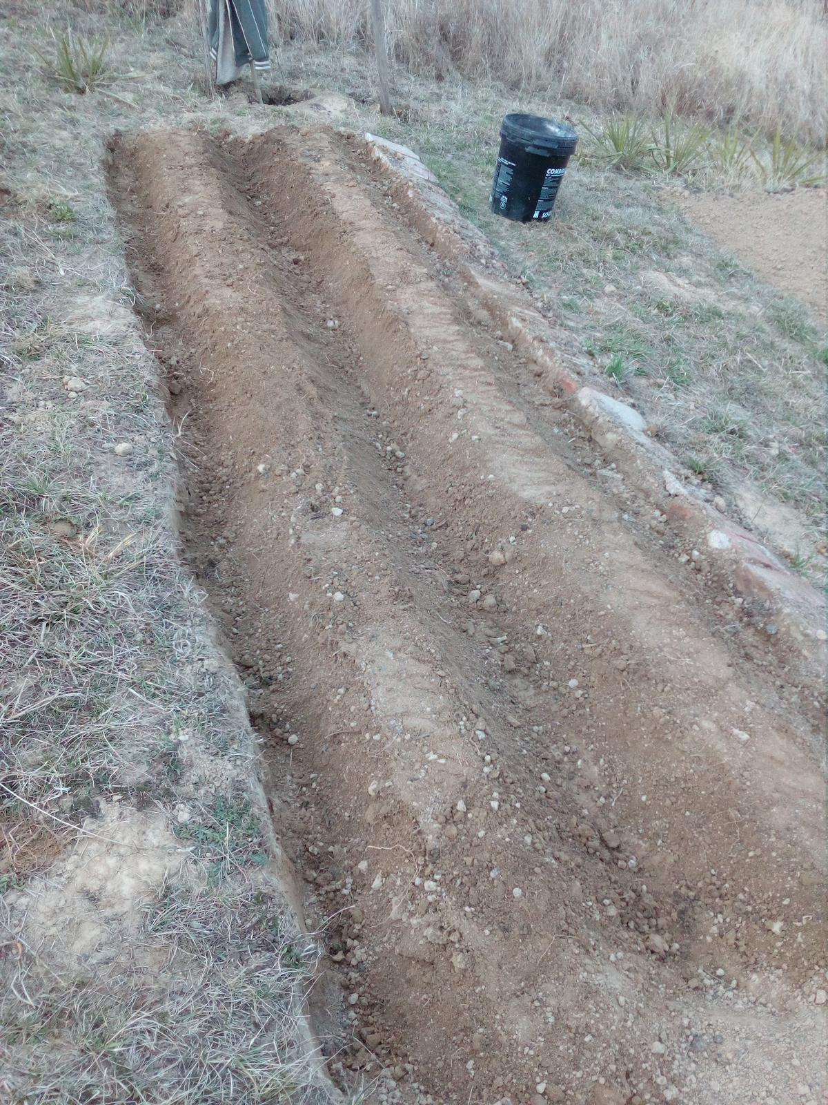 Okolie domu, záhrada - jar - skúšali sme hrobovanie mrkvy. Máme krásnu dlhú hrubú mrkvičku. Len tie hroby by mal ibyť ešte širšie.