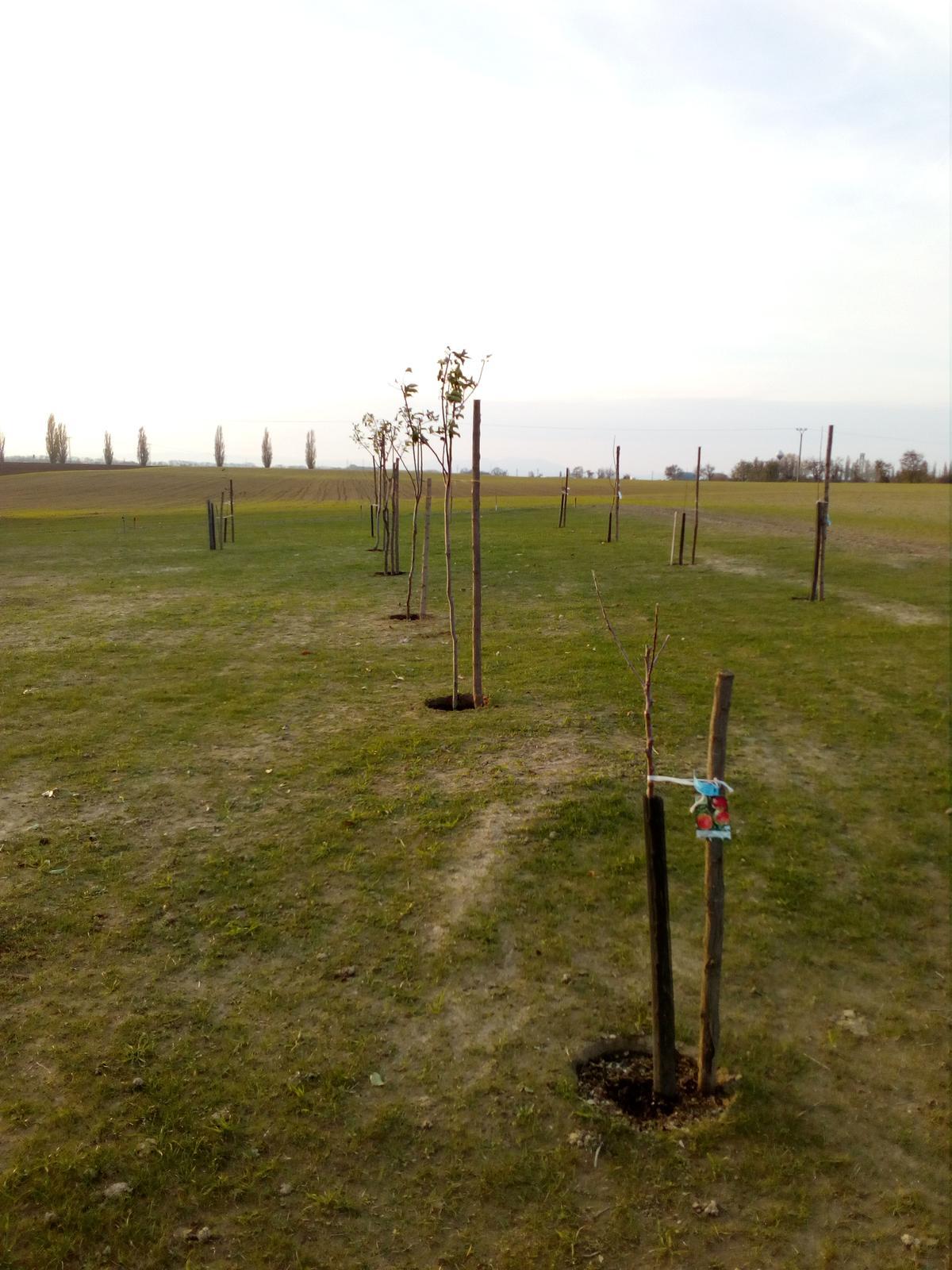 Okolie domu, záhrada - 04.11.2017 - Výsadba stromčekov