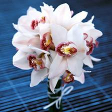 tato je moje favoritka. bílé orchideje