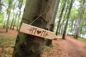 Dřevěné cedulky - prázdné 8 kusů,