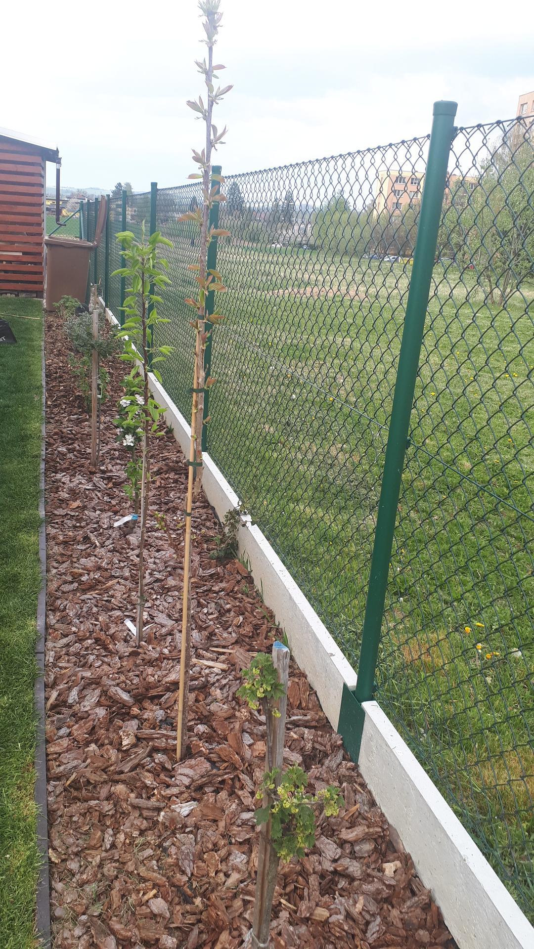 Kozel zahradníkem... aneb zkoušíme to sami! Rok 3. - Užitkový záhon... rybí, angrešt, rakytník, maliny a zkoušíme sloupové stromky... jabloň, hrušeň a třešeň