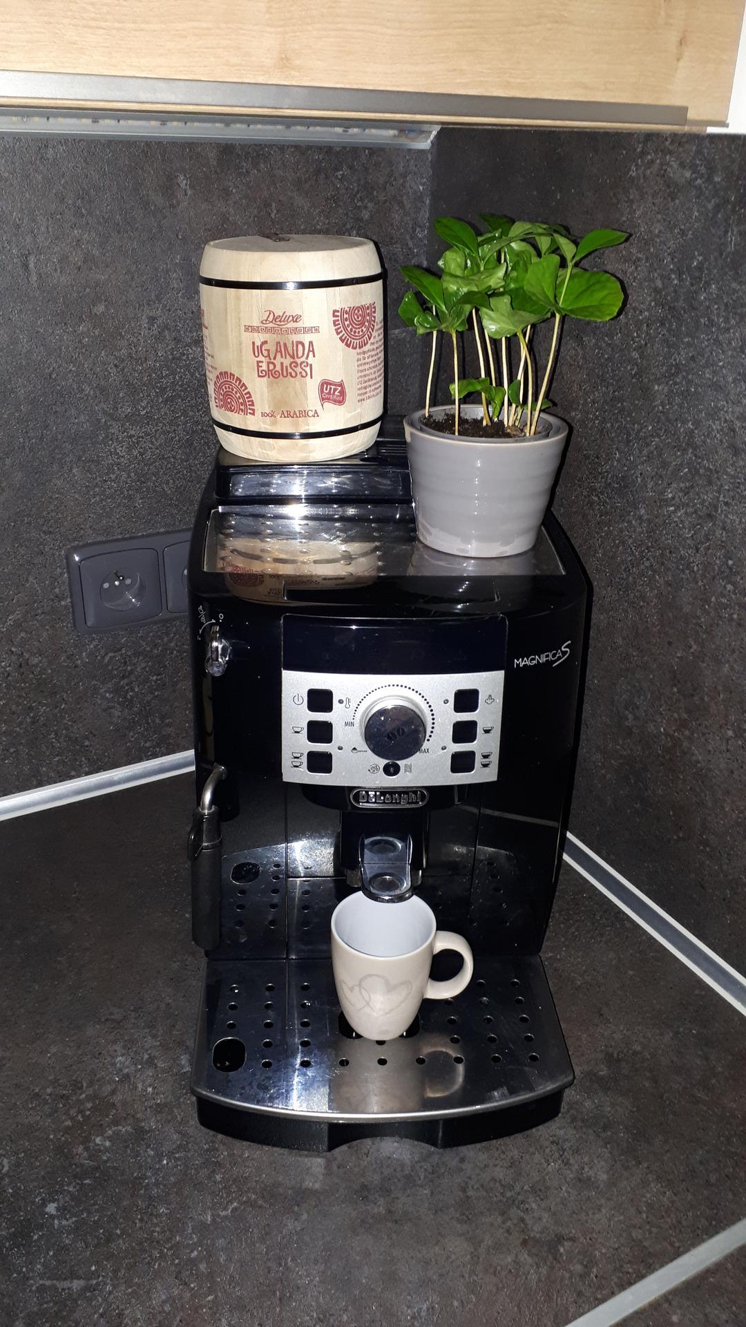 U nás 2021... aneb DOMA s láskou ❤ - Kávy není nikdy dost... už ji i pěstuju 😉☕