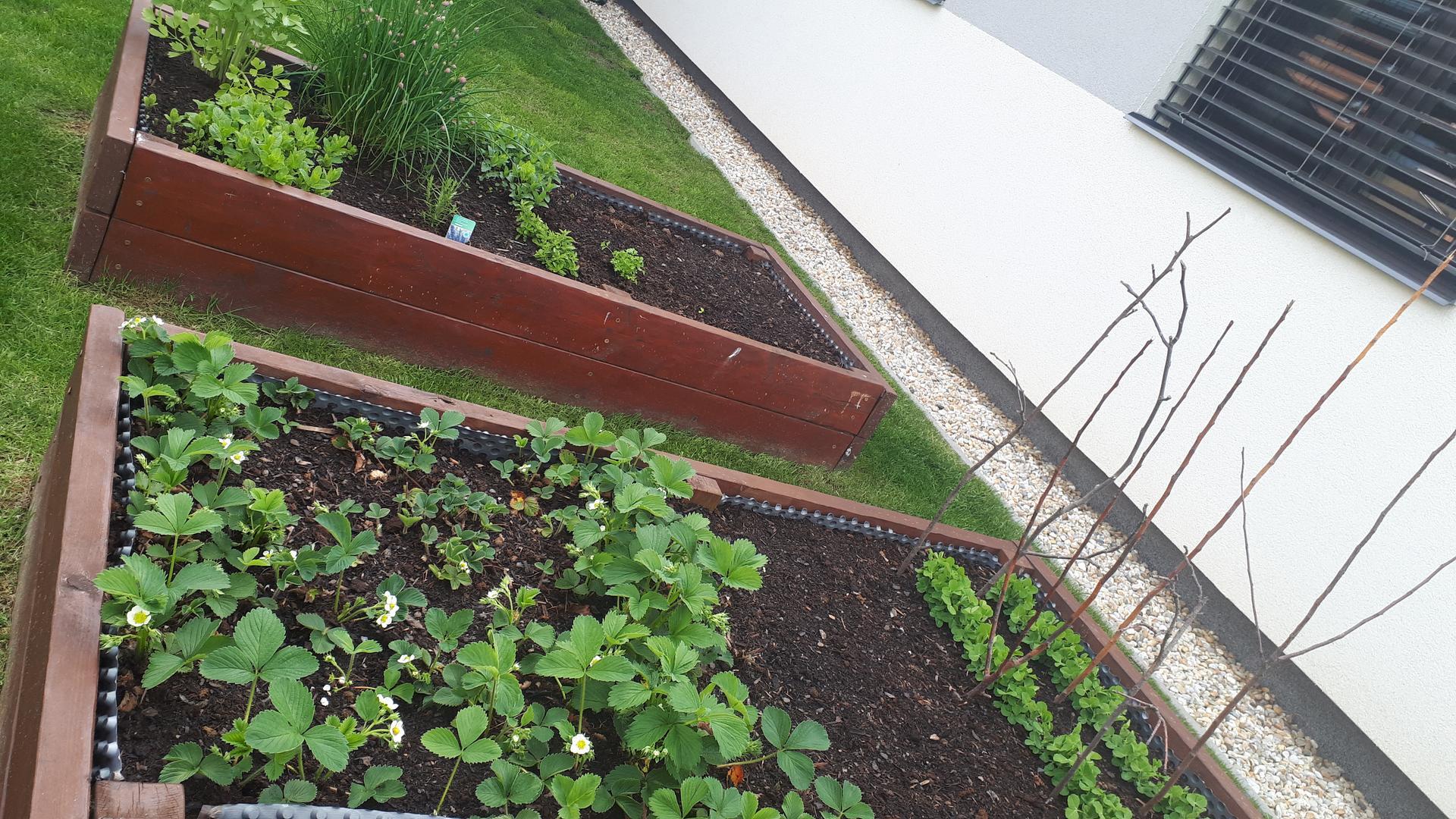 Kozel zahradníkem... aneb zkoušíme to sami 😊. Rok 4. - Obrázek č. 15